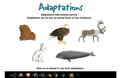 animal adaptation - photo #8